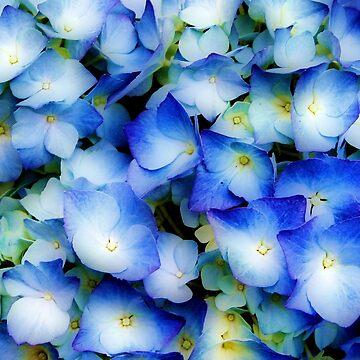 Hydrangea in Blue by Jokus