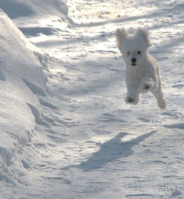Weeeeeeeeeeeee! by lorilee