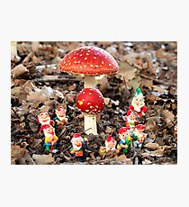 Gnomes party in the Fly Agaric Forest. Photographic Print