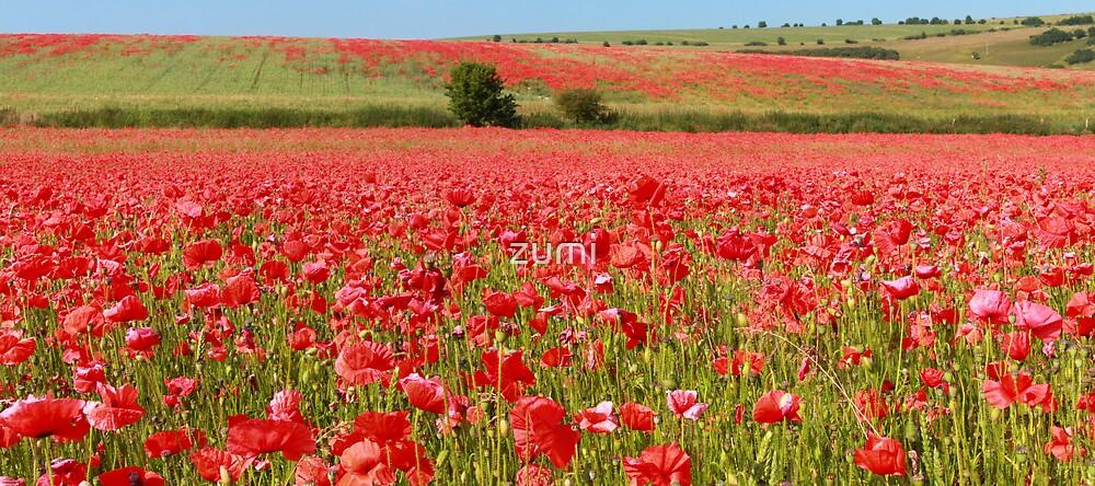 Field of red by zumi