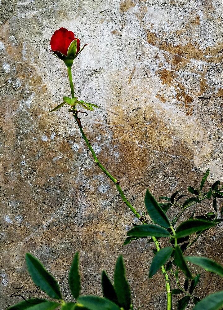 CLIMBING ROSE by ZannaLea