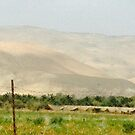 DATE FARM (West Bank, Palestinian Territories) by ZannaLea