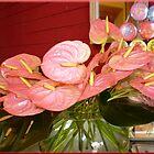 Anthurium - in einer Vase mit Wasser von EdsMum