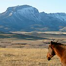Ear Mountain and Horse by Donna Ridgway