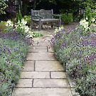 Lavender Path by SiobhanFraser