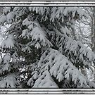 Snowy Evergreen by tawaslake