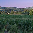Cornfield by WatscapePhoto