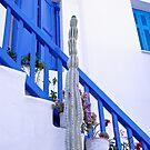Cactus by Peter Bellamy