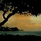 Tree Cover... Kauai Sensual Series by linaji