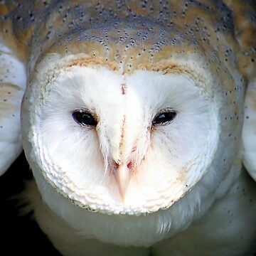 Barn Owl - I See You by Jokus