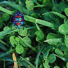Where's the four leaf clover by Graham Mewburn