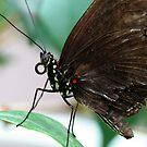 broken wings by tabusoro