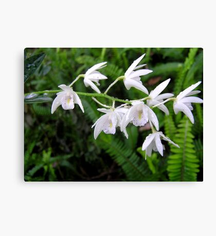 Native Orchids with Raindrops Canvas Print