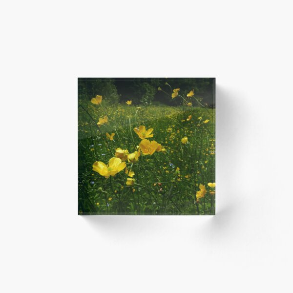 Meadow Buttercup (Ranunculus acris) Acrylic Block