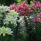 Lillies lillies lillies by Linda Miller Gesualdo