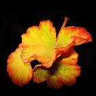Simple Leaf by EdsMum