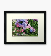 Glorious Hydrangea Bush  Framed Print