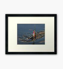 Northern Pike (Jackfish) Framed Print