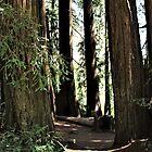 Redwood Fairy Circle by Martha Sherman