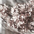 Pale Pink  by amgunnphotoart