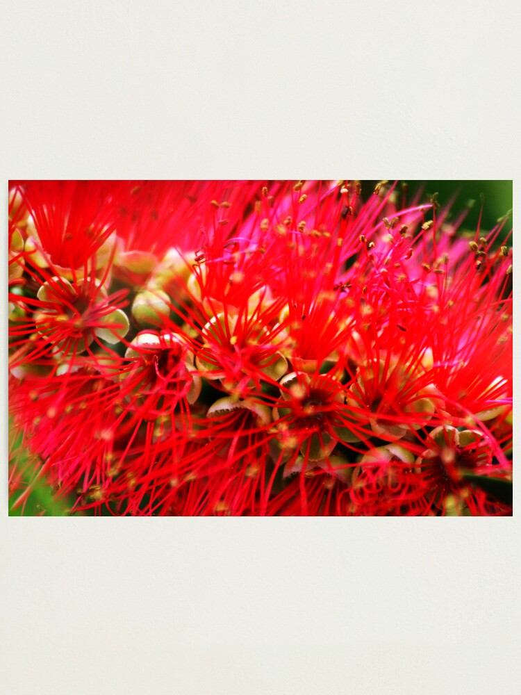 Alternate view of Explosion of Red Photographic Print