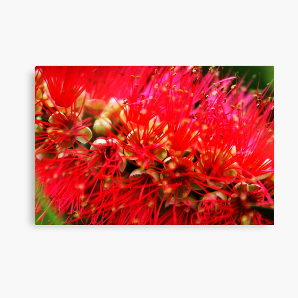 Explosion of Red Canvas Print