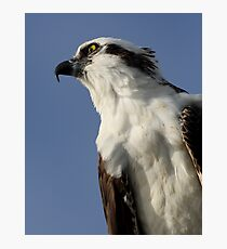 Focused Osprey Photographic Print