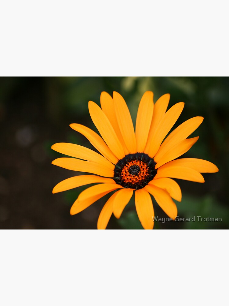 Flower by redmoondragon