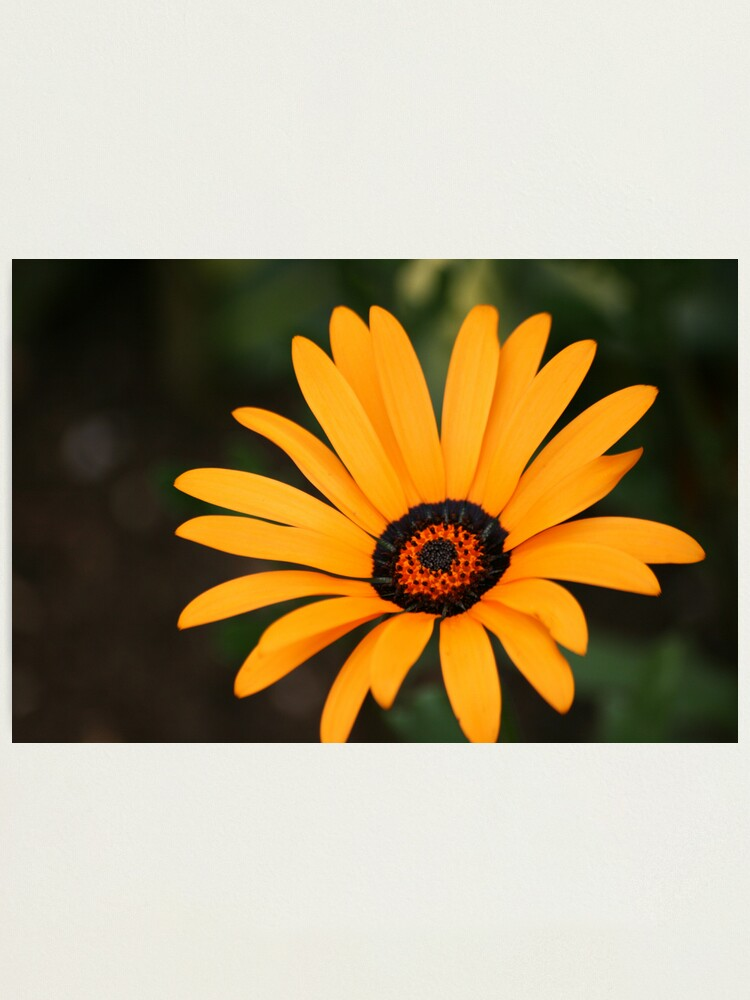 Alternate view of Flower Photographic Print