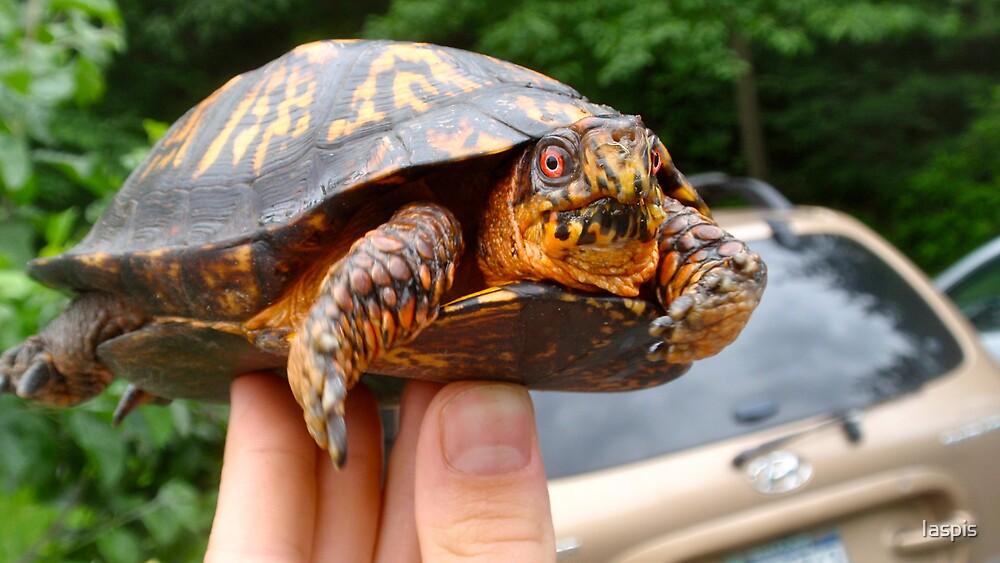 Box Turtle by Iaspis
