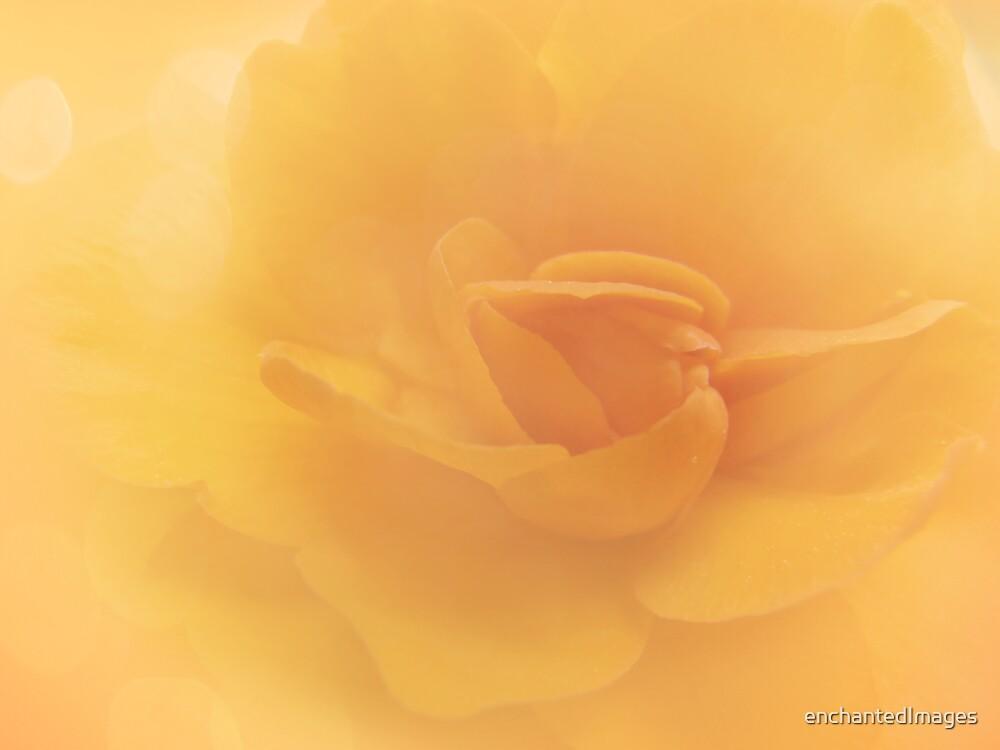 Begonia by enchantedImages