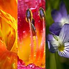 Floral Rainbow by J. Scott Coile