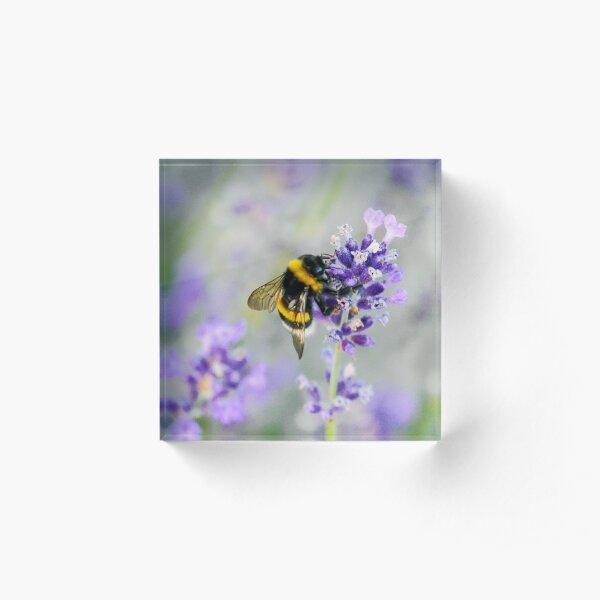 Bumblebee Acrylic Block