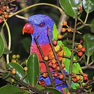 rainbow parrot by kristian smith