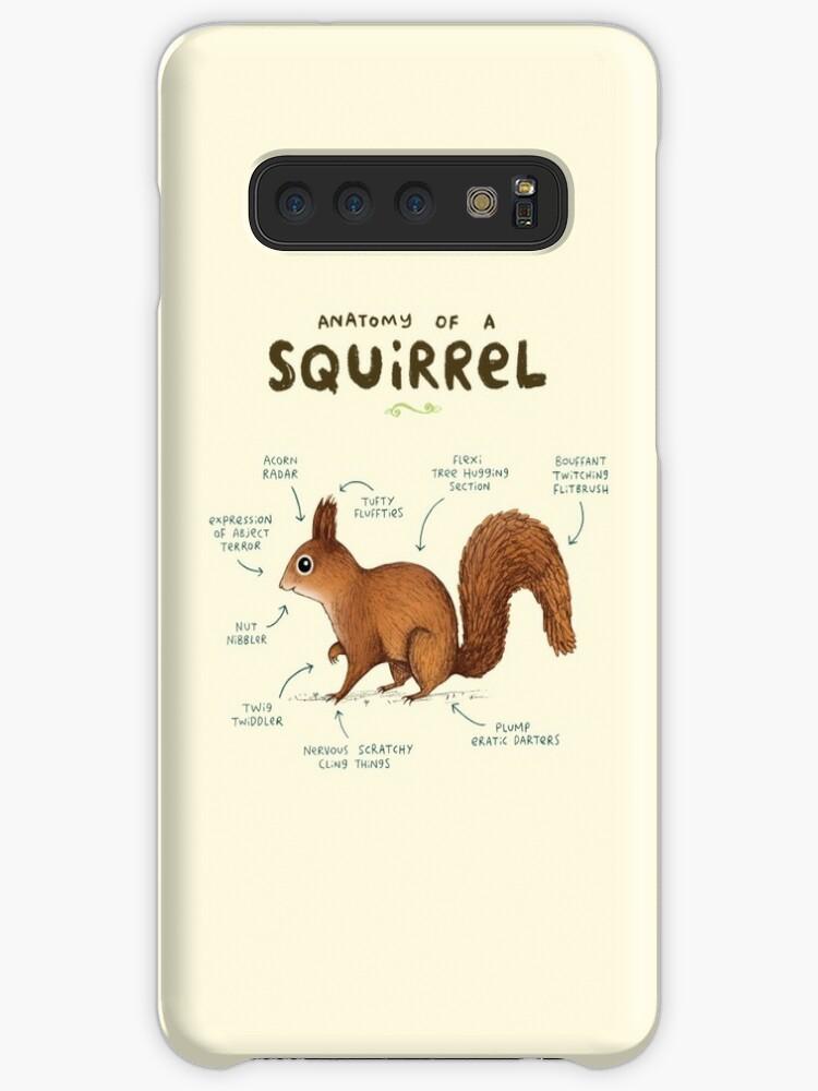 Anatomie eines Eichhörnchens von Sophie Corrigan