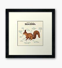 Anatomy of a Squirrel Framed Print