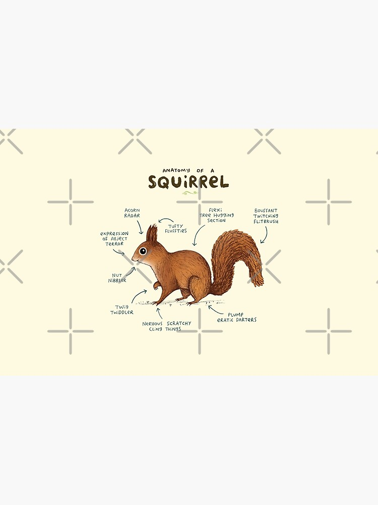 Anatomy of a Squirrel by SophieCorrigan