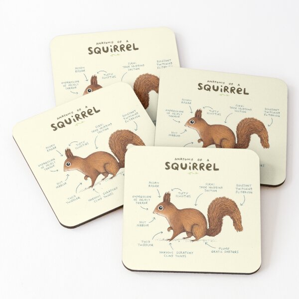 Anatomy of a Squirrel Coasters (Set of 4)