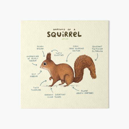 Anatomy of a Squirrel Art Board Print