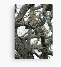 Leopard Kill Canvas Print