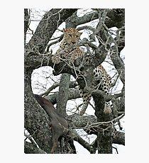 Leopard Kill Photographic Print