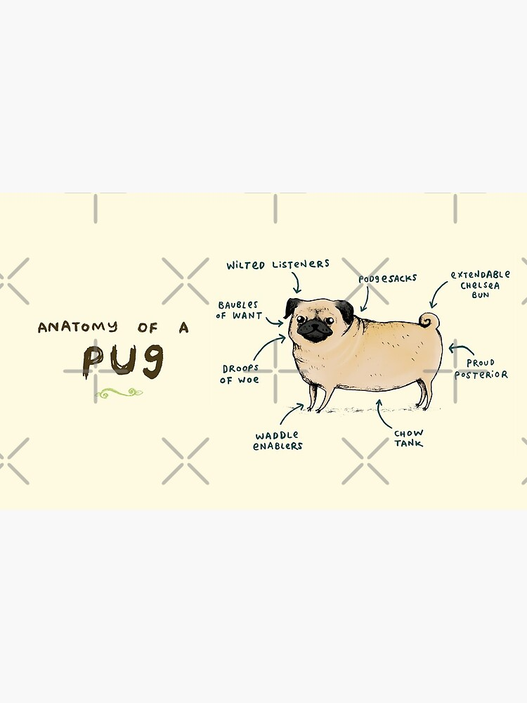 Anatomy of a Pug by SophieCorrigan