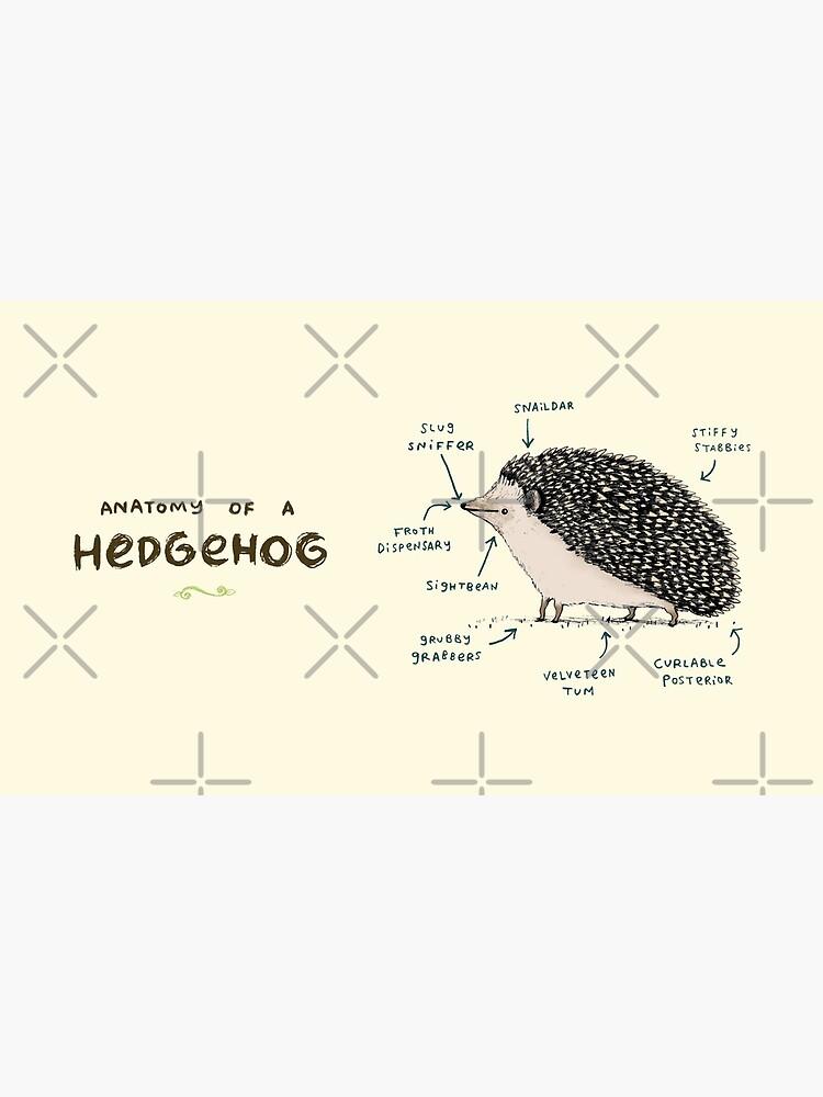 Anatomie eines Igels von SophieCorrigan