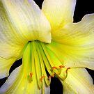 flower macro by Sheila McCrea