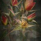 Rust 'n Roses ~ #8 by Rosalie Dale