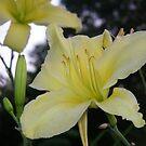 yellow flower by Sheila McCrea
