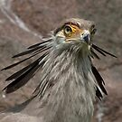 Secretary bird by Thea 65