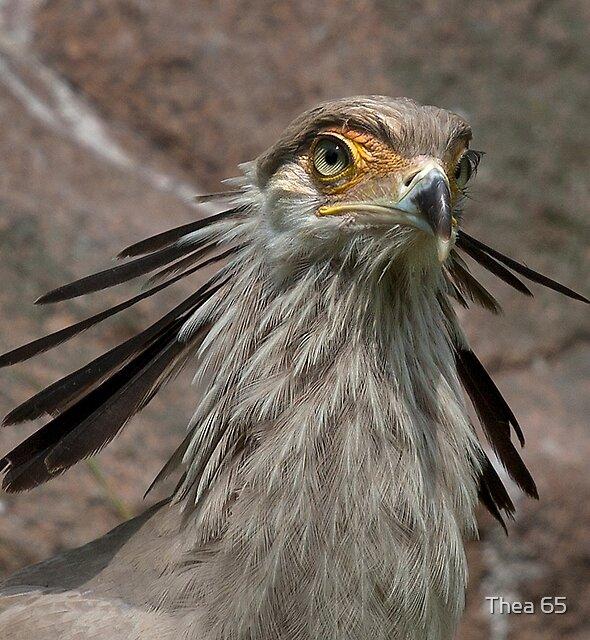 Secretary bird by Thea 65