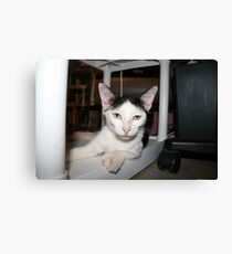 What's Your Shelf-Life? Canvas Print