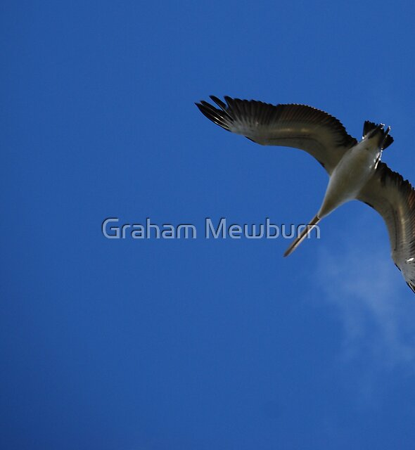 Up in the blue by Graham Mewburn